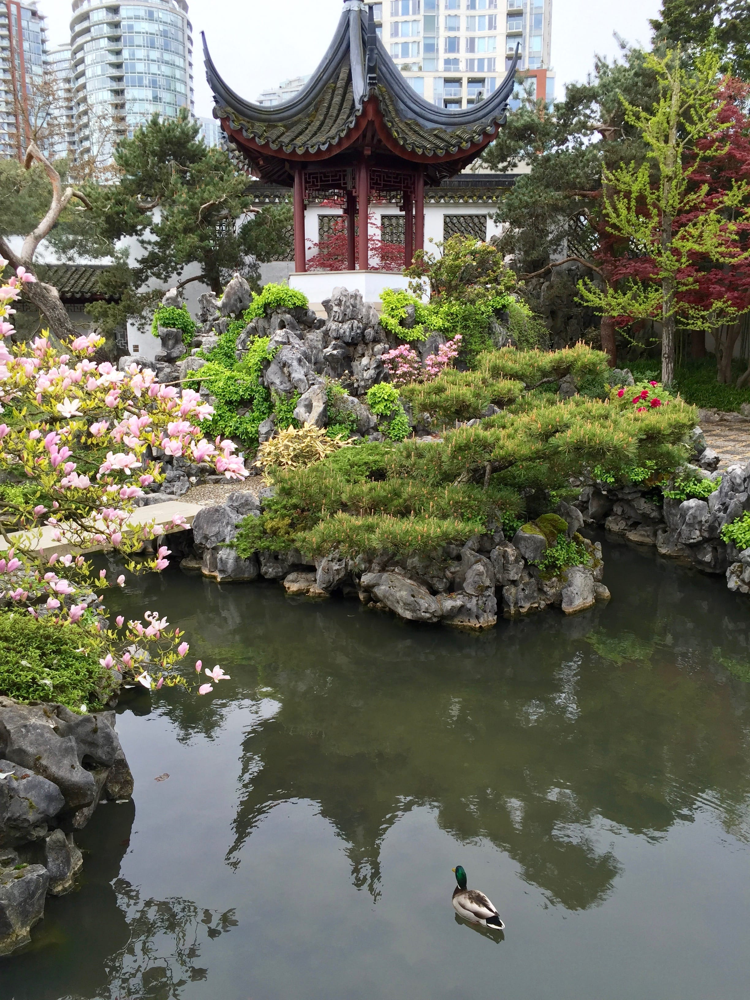 The Dr. Sun Yat-Sen Classical Chinese gardens were so cool. We got a tour of the gardens by a guide who taught us all sorts of things about ancient Chinese culture.