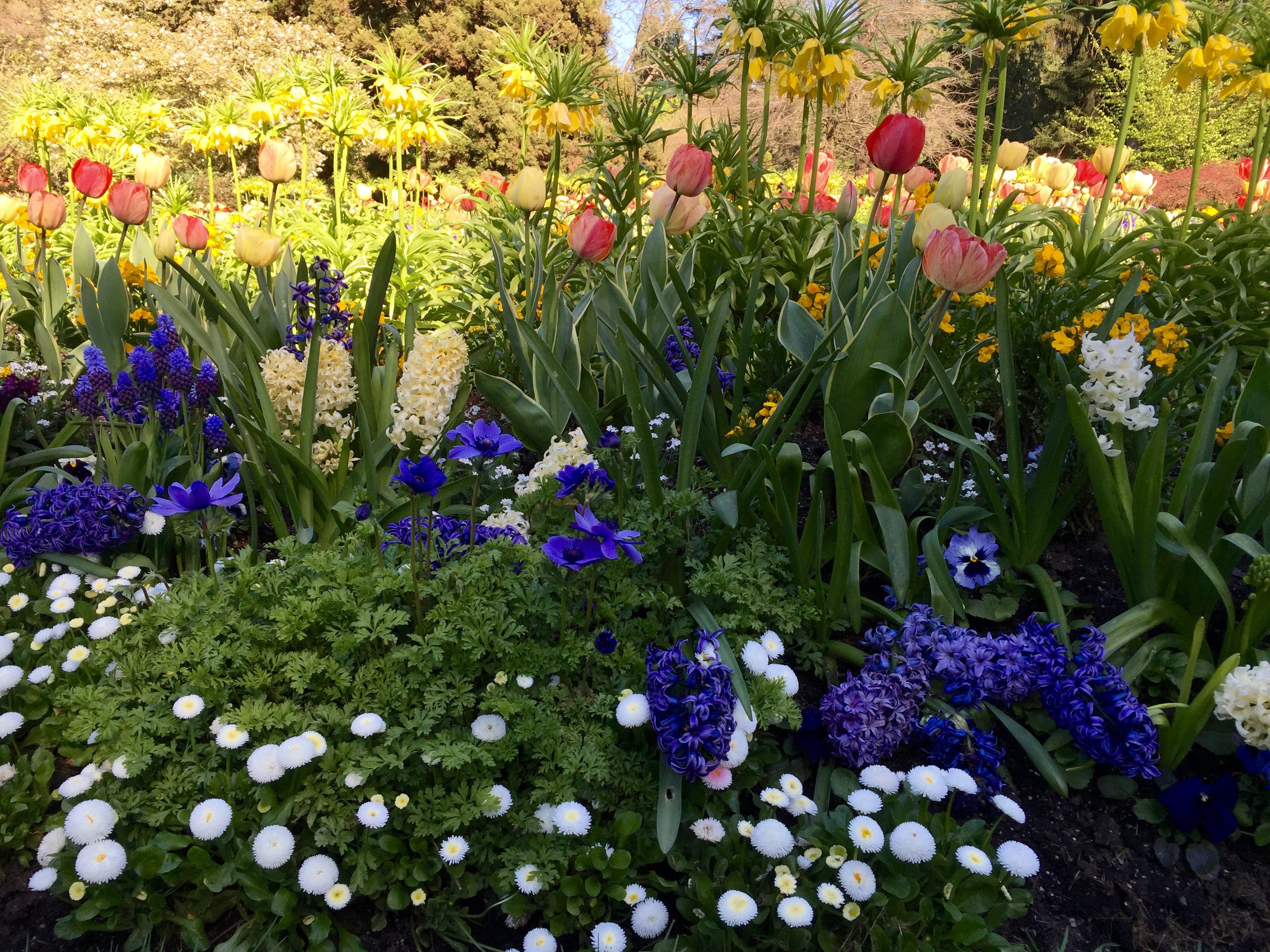 Definitely take an entire afternoon to explore Stanley Park. The flower gardens are incredible and I couldn't believe they actually could have such pretty flowers in a public garden.