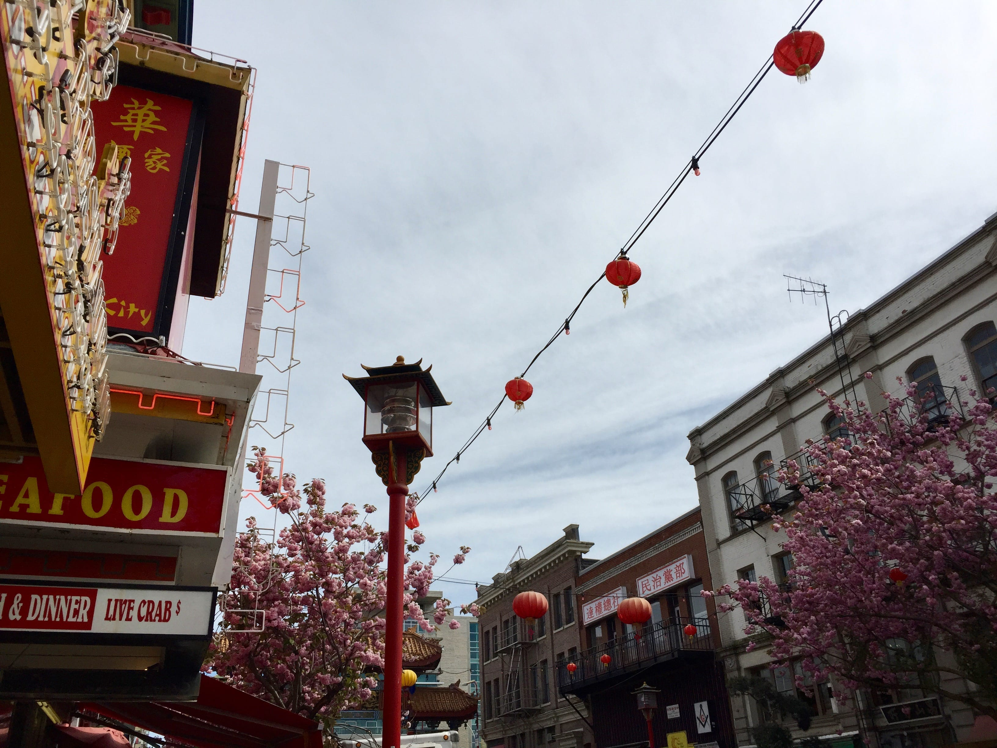 Upon arriving in Victoria (so worth the trek), we visited China Town first.